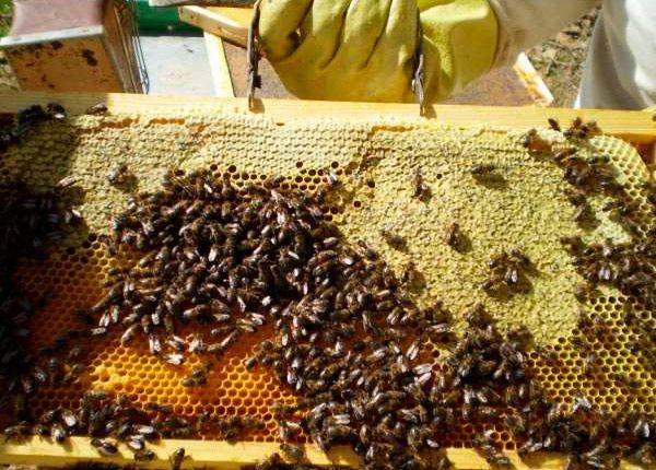 Miel Norte de Palencia